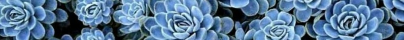blue1000x101succulents
